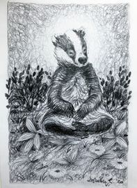 Peaceful badger